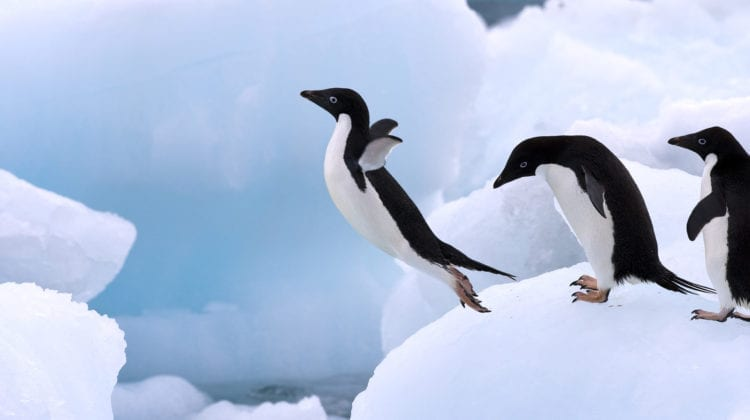 Leadership quote featured image - penguins on iceberg.
