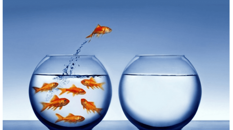 Jumping ship - switching firms goldfish photo.png