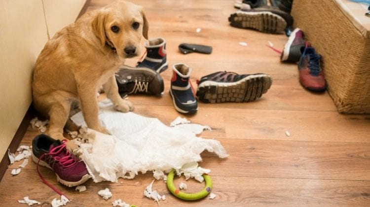 When things go wrong - guilty dog!
